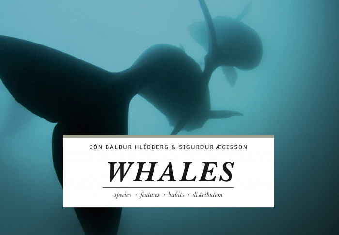 Whales - hvalir