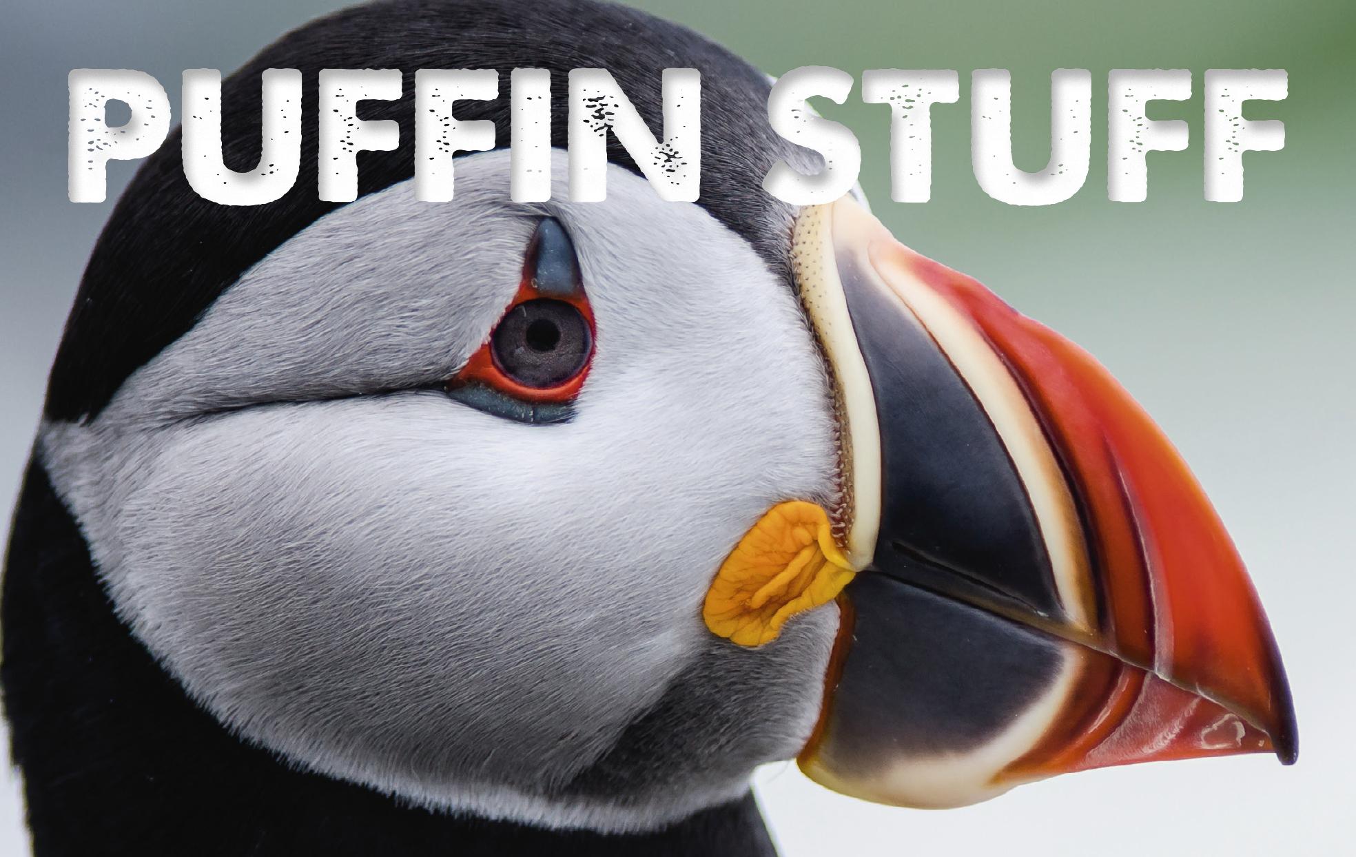 Puffin Stuff