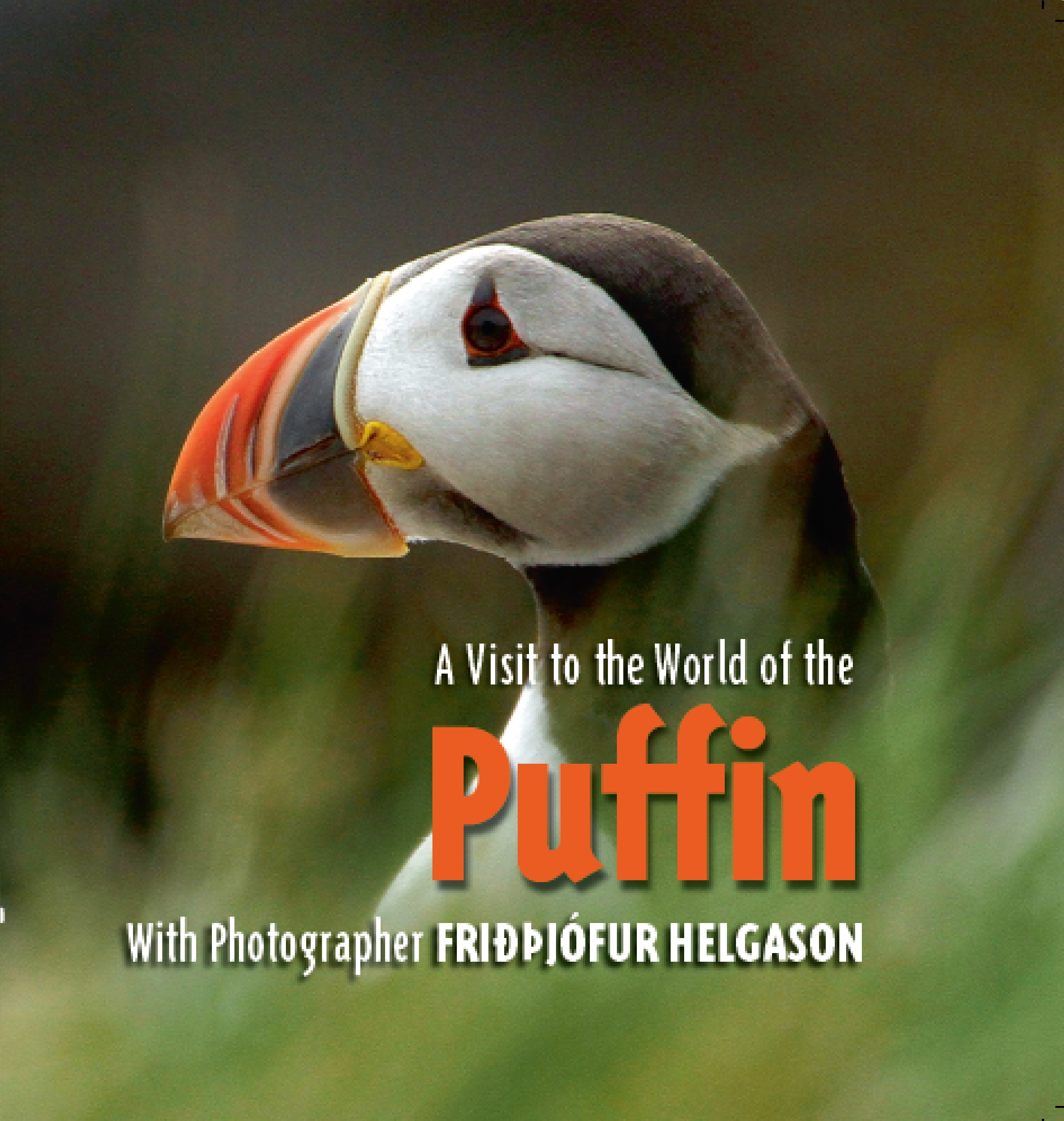 A Visit to the World of the Puffin