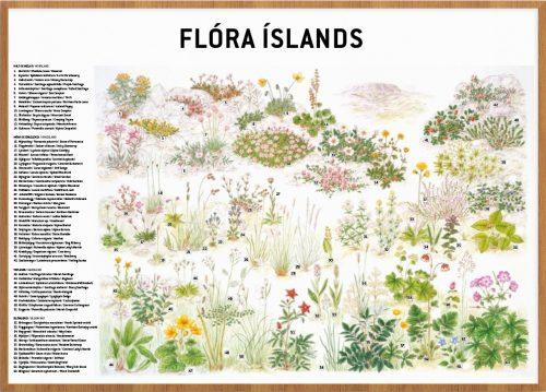 Flóra Íslands - veggspjald